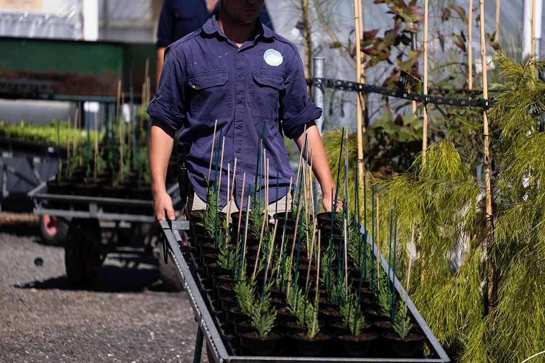 granton-plants-nursery-hobart-tasmania-launceston-trade-commerical-local-delivery-2